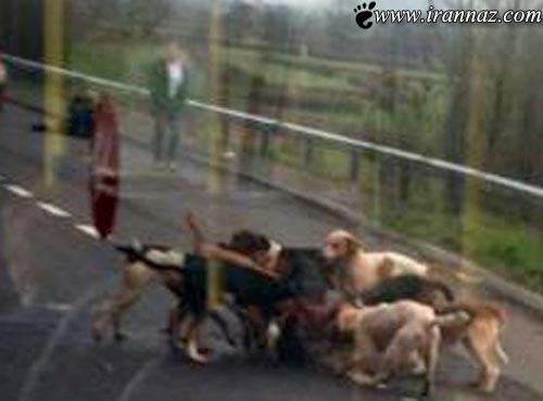صحنه وحشتناک مقابل چشم مسافران اتوبوس (تصاویر)