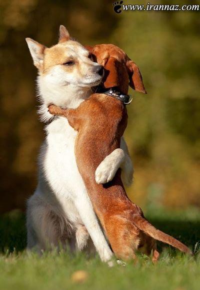 انواع و اقسام بوسه های عاشقانه در ملاعام (تصویری) 1