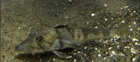 عجیب و منحصر به  فردترین ماهی موجود در دنیا (عکس)