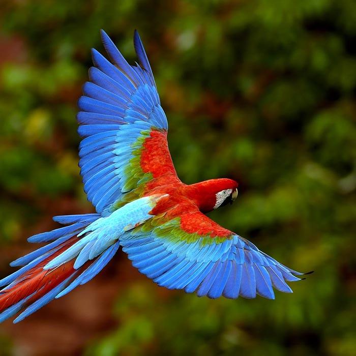 عکس هایی کم نظیر از دنیای حیوانات و پرندگان
