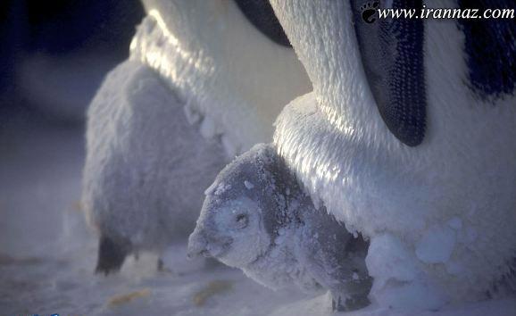 محافظت دیدنی این مادران از فرزندان خود! (تصاویر)
