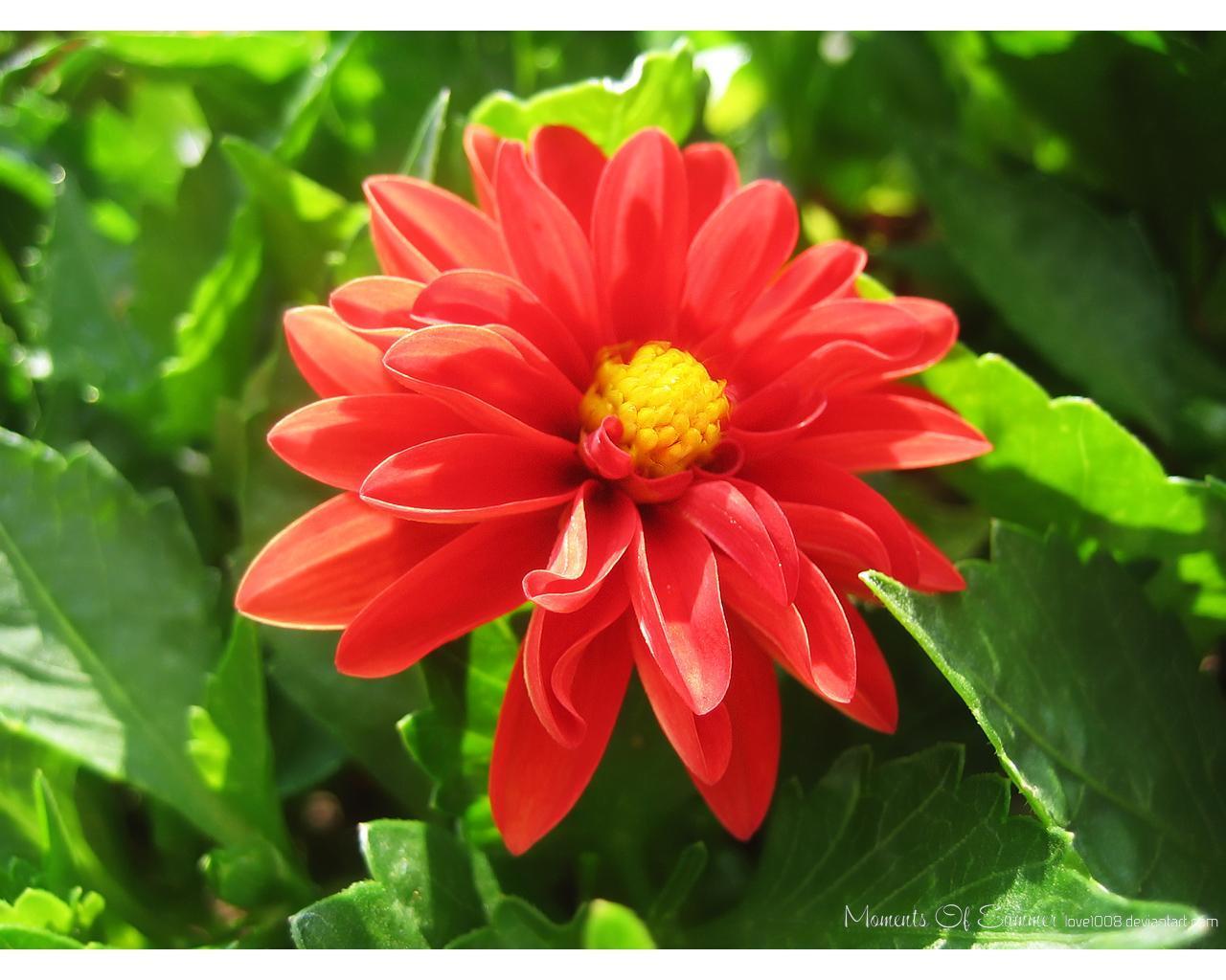 عکسهایی از گلهای زیبا با کیفیتی بسیار بالا