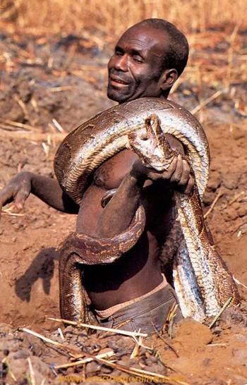 گزارش تصویری از شکار مار بزرگ پیتون در آفریقا