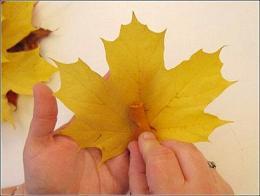آموزش گلسازی با برگ های پاییزی (تصویری)