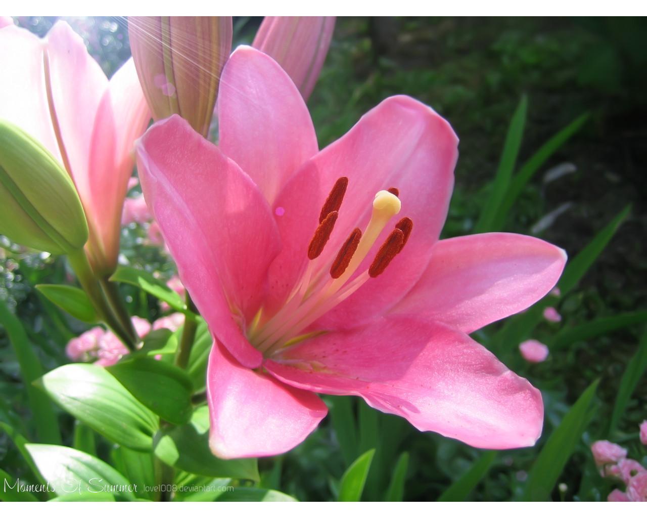 عکس هایی از گل های زیبا و رمانتیک
