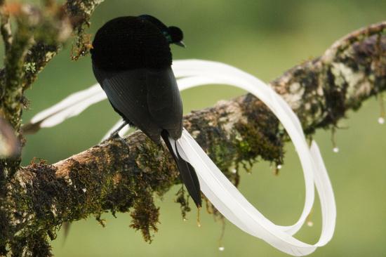 عکسهایی از زیباترین و کمیاب ترین پرندگان