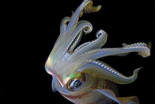 عکس هایی از دنیای شگفت انگیز و زیبای زیر آب