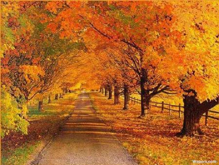 عکس های جاده های رویایی با مناظر زیبا
