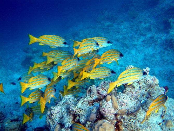 عکس هایی بسیار زیبا از اعماق اقیانوس ها :) 1