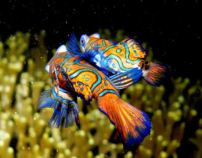 ماهیان بسیار زیبا در اعماق اقیانوس ها