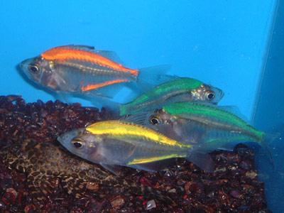 عکسهایی از جراحی زیبایی ماهیها !!!