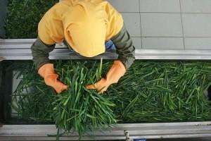 روش تمیز کردن سبزیجات