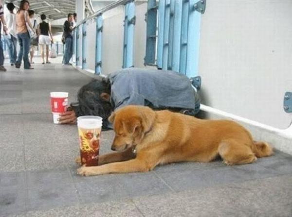 عکسهایی بسیار دیدنی از همکاری سگ با انسان