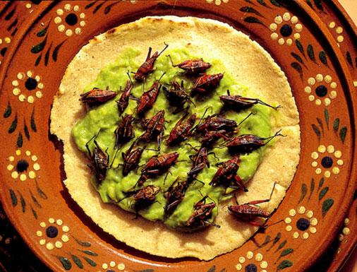 حشرات خوردنی