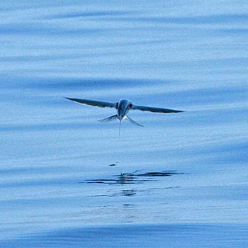 عکسهای از ماهی بسیار عجیب پرنده