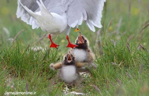 ده عكس برتر پرندگان در سال 2010