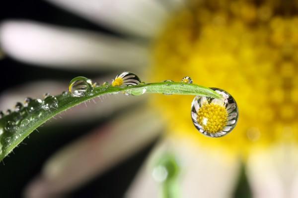 عکس هایی از قطره های زیبای باران
