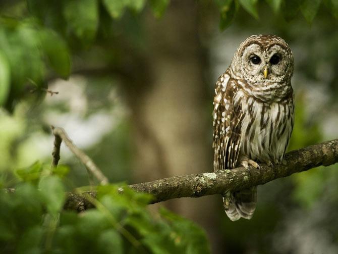 عکس هایی بسیار زیبا و دیدنی از دنیای حیوانات