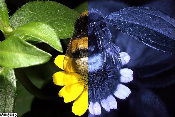 جهان را از چشم زنبورها ببینید!!