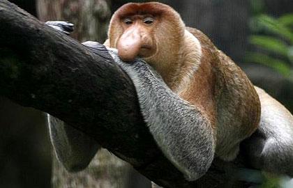 عکس هایی از عجیب ترین جانوران در حال انقراض