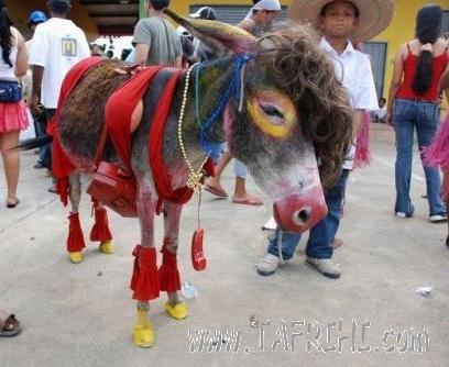خر مکزیکی