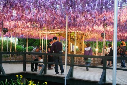 عکسهایی بسیار زیبا و باور نکردنی از بهشت ژاپن