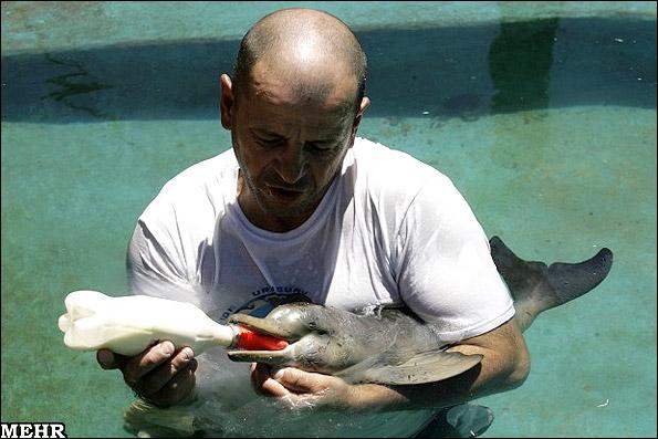 بچه دلفینی که کاربران اینترنت را شیفته خود کرد!