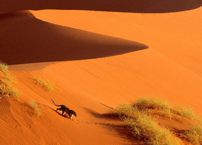 عکسهایی بسیار دیدنی از حیات وحش آفریقا