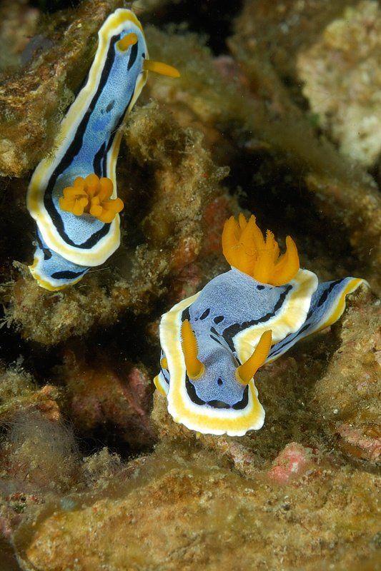 عکسهایی از زیباترین ماهیها در اعماق اقیانوس