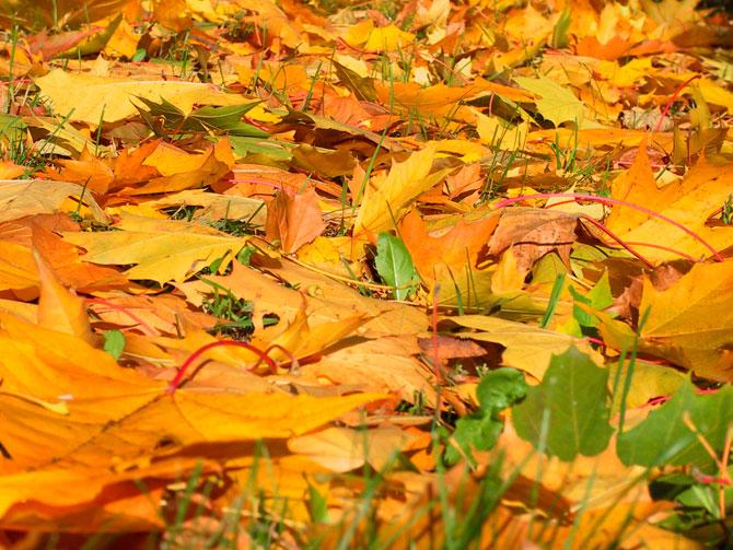 عکس هایی رویایی و زیبا از فصل پاییز