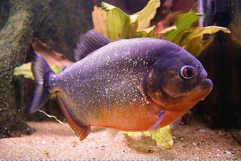 ماهی های درنده تر و کشنده تر از کوسه!!!
