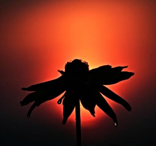 عکس های بسیار زیبای سیاه نما