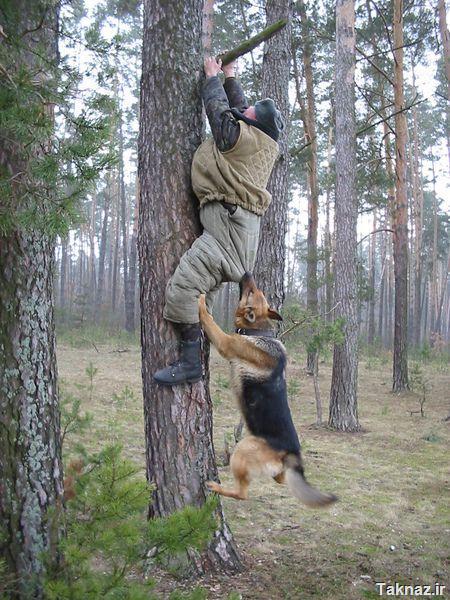 عکس هایی بسیار خنده دار از انسان و حیوانها