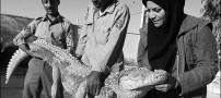 زن ایرانی و راه اندازی مزرعه پرورش تمساح!!