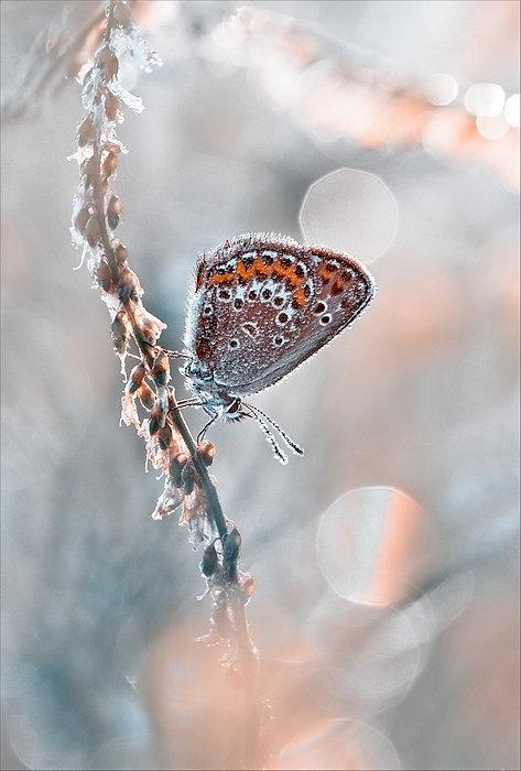 عکس های زیبا و شگفت انگیز از یک دنیای جادویی