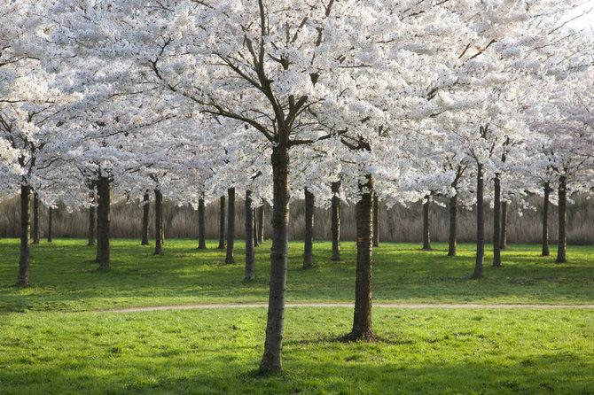 عکس هایی بسیار دیدنی و بی نظیر از طبیعت زیبا
