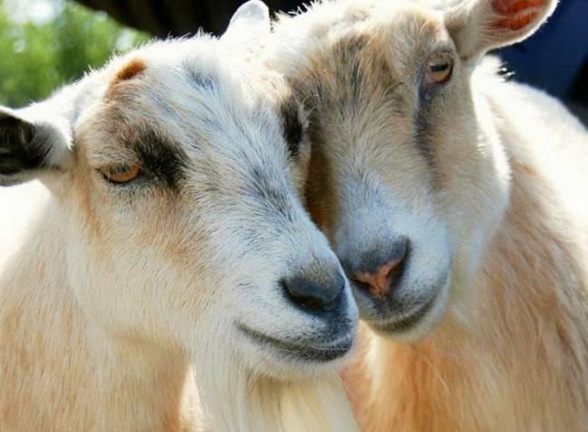 عکس هایی کمیاب از عشق در میان حیوانات